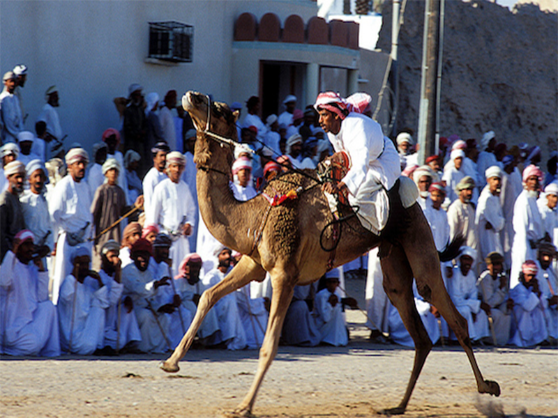 Camel racing: a deep-rooted traditional sport